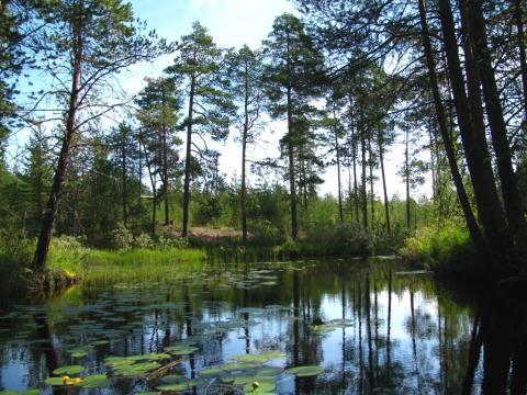Мы направлялись к ручью, который, судя по карте, должен соединять это озеро с Кимасозером