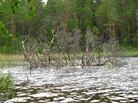 Живописные деревья не только отражаются в воде, но и торчат из этой самой воды, не подпуская к берегам